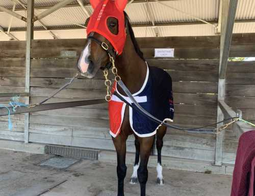 BRAD'S GOULBURN WINNER – AND NOW IT'S SHOWTIME